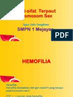 7 Pewarisan Sifat Hemofilia - Copy