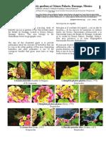 1167 Mexico Butterflies of Gomez Palacio