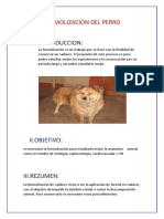 Formolizacion Del Perro