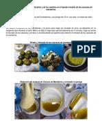 Proceso de Combustión Extracto de Mandarina