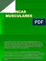 PALANCAS MUSCULARES