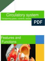 Circulatory Systemfinal