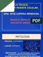 1 Clas. Primer Semestre , Celular, LEesion y Muerte Celular2