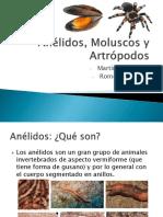 Anélidos, Moluscos y Artrópodos