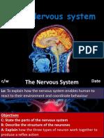 L7 - Nervous System