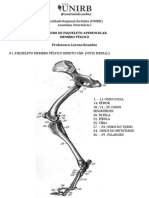 Osteologia Membro Pélvico
