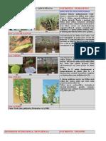 DEFICIENCIAS EM PLANTAS EM  IMAGENS.doc