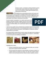 Alimentos_Andinos.docx