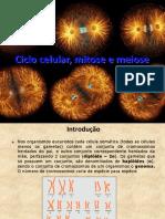 Ciclo Celular Mitose e Meiose JKVhsqd