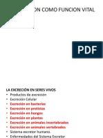 EXCRECION SEPTIMO.pptx