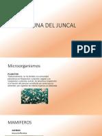 Fauna Del Juncal