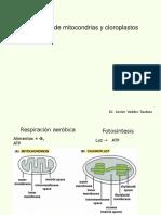 Biogenesis de Mitocondrias y Cloroplastos Dr. J. Valdez