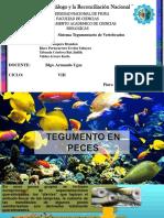 SISTEMA TEGUMENTARIO EN VERTEBRADOS