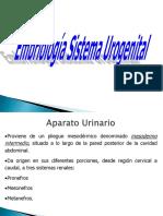 Embriología Sistema Urogenital
