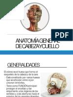 Anatomía General de Cabeza y Cuello