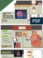 Sistema Respiratorio i