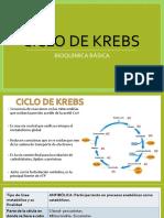 Ciclo de Krebs- Realizado Por Nilda Espinoza Ima
