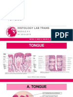 4.1A-Tongue (GIT)