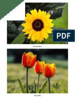 Flora dan Fauna.docx
