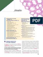 01-Sistema urinario.pdf