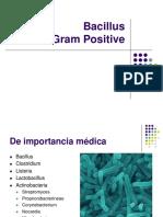 Gram Positive Bacillus Clase