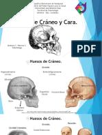 Huesos de Cabeza y Cara. Arehana C. Herrera S.