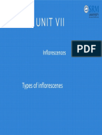 Inflorescences.pdf