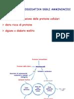 Ciclo Dell'Urea