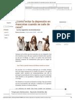 ¿Cómo Evitar La Depresión en Mascotas Cuando Se Sale de Casa
