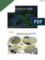 BC - Nucleo celular y ADN - 2017 - II.pdf