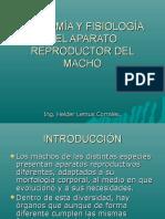 Anatomiayfiosiologiadelaparatoreproductordelmacho 151008171324 Lva1 App6891