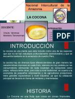 Cocona Expo..