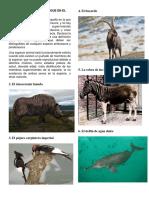ANIMALES QUE SE EXTINGUE EN EL MUNDO.docx
