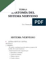 6. Anatomia Del Sistema Nervioso