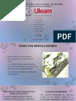 DAÑO DE CULTIVO ENTOMOLOGIA 2.pptx