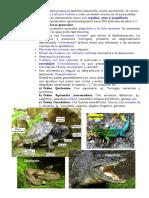 Amniotas . Reptiles