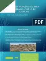 Procesos Tecnológico Para Siembra Del Cultivo de Aguacate