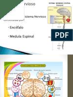 Estres e Hipotalamo Biologia Elec