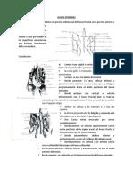 Hueso Etmoides y Occipital