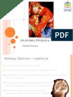 Sistema Nervoso Reduzido PDF Aula
