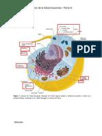 Interior de la célula Eucariota - Parte A