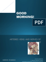 Arteries Veins and Nerves of Face