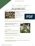 Arbusto Abelia (Grandiflora Hort.) - FazFácil