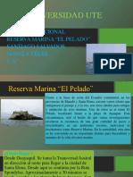 Reserva Marina El Pelado