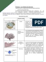 1º Medio Biología Las Celulas Eucariontes