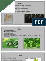 Cucurbicaece. Botanica
