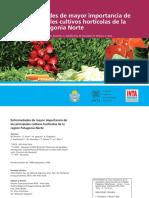 Enfermedades de Mayor Importancia de Los Principales Cultivos Hortícolas de La Región Patagonia Norte