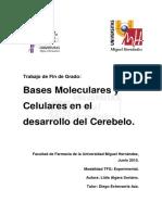 Bases moleculares en el desarrollo  del cerebro.