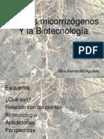 agrobacterium tumephasion
