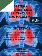 PULMONES ANATOMIA HUMANA 2017.pptx